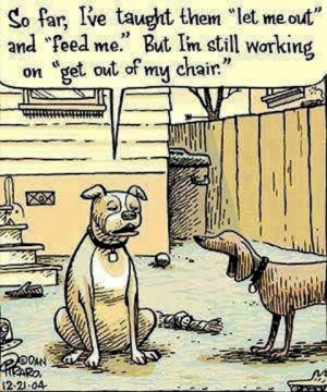funny dog jokes Hilarious Cartoon Joke LMAO!