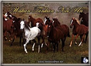 Wild Horses Quotes Tube Horse