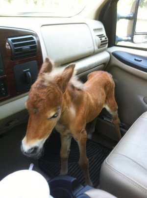 15+ Mini Horses You Don't Want Your Kids To See   Bored Panda