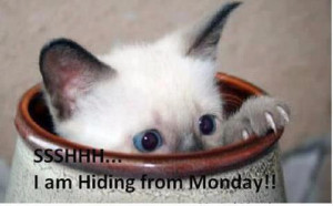 of my closest friends would love to hide from mondays. They are still ...