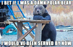 funny-pictures-if-i-was-a-polar-bear-i-wouldve-been-served
