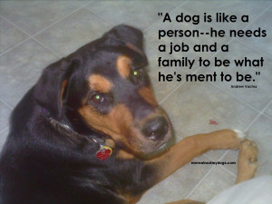 source http moreaboutmydogs com dog quotes dog quote an