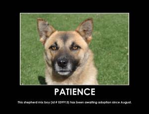 Animal Patience Quotes. QuotesGram