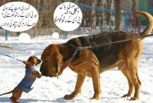 Urdu picture funny animals fight