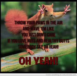 animal, cute, funny, meme, pretty, quote, quotes, squirrel funny