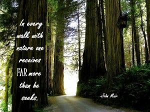 Nature Quotes Quot Take Walk The Forest