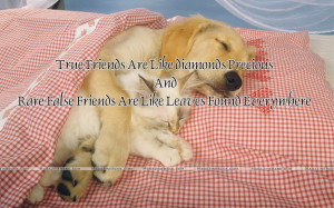 Friendship And Love Quotes Good friends who i love and