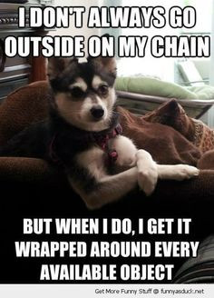 Funny cat & dog | Top 25 funniest cat and dog quotes More