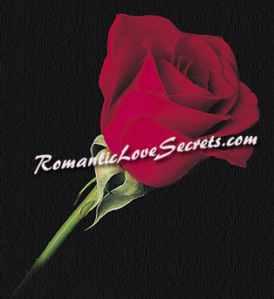 Images Of Roses With Love Quotes