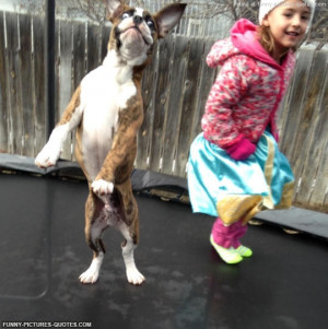 Girl with her dog on a Trampoline