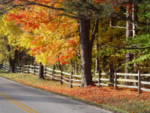 ... fall foliage in Ohio. Here are some great places to catch the changing