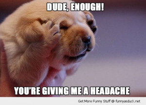 dude enough cute headache dog puppy paws hands ears face funny pics ...