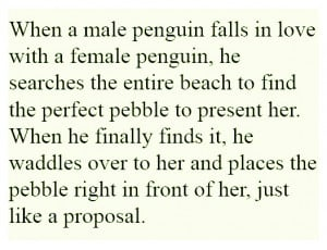 Penguin Love Quotes Emporer penguin love pebble