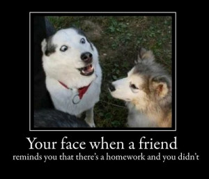 funny+Dog+pictures+with+quotes+(158).jpg