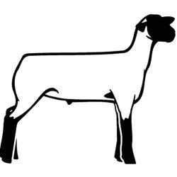 another_lamb_greeting_cards_pk_of_10.jpg?height=250&width=250 ...