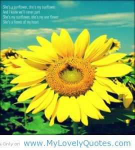 ... part ,she is my sunflower she is my one flower sunflower quotes tumblr