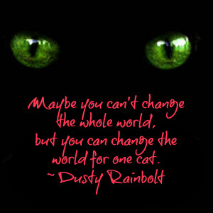 Cat and Paranormal Quotes by Dusty Rainbolt