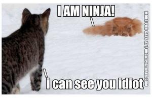Ninja cat in the snow