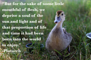 Cute Baby Animals With Quotes Cute Animal Animal Baby