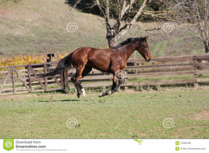 Thoroughbred Horse The Grass