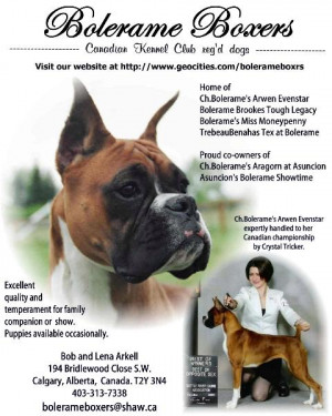 Funny Boxer Dog Pictures and Quotes