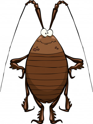 Funny Cockroach Pictures Gallery