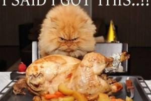 Funny cat and roast turkey | funny-pics.co