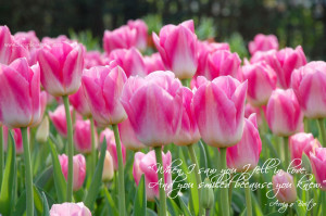 Pink Tulips To Fill In The Gap