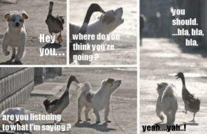 funny dog and goose interplay funny dog and goose interplay