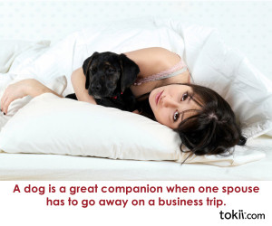 ... /wp-content/flagallery/dog-quotes/thumbs/thumbs_companion.jpg] 338 1