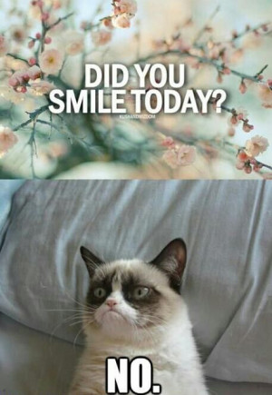Funny Cats .. Best Funniest Cat Quotes