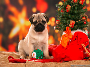 cute christmas dogs cute christmas puppies funny christmas dogs ...