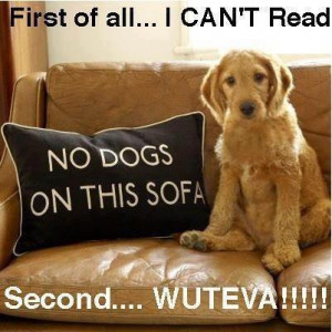 funny funny dog joke pic Funny Dog Pic of the Day