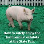 How to Dress for Livestock Showmanship A letter to fair-goers from a ...
