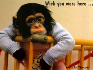 Wish You Wre Here Cute , Miss You Cards