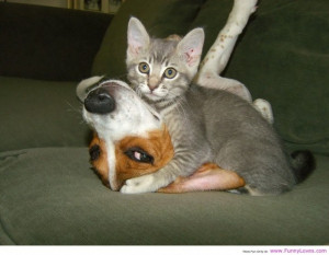 Funny Animal Pictures With Quotes About Life: Cat Watching Love Animal ...
