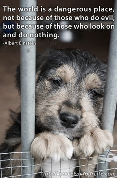 May is animal abuse awareness month. There is nothing more innocent ...