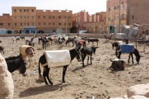 donkey parking lot