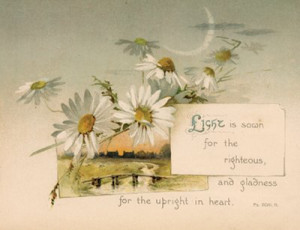Light is Sown for the Righteous ... Daisies, Antique Print