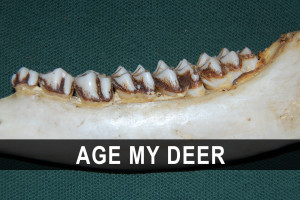 Whitetail Deer Hunting Quotes Watch deer videos from the odwc