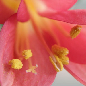 check out my full load pollen by OliBac @ flickr