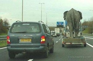 Elephant In Car Trailer ..Funny Pictures By Cool Fun Pics