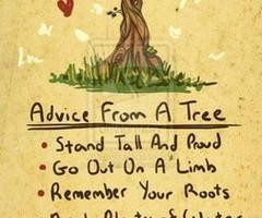 Advice From a Tree Quote