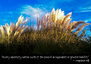 Every adversity carries with it the seed of an equivalent or greater ...