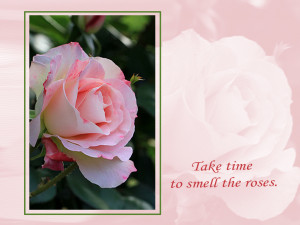 Desktop wallpaper with Pink Rose.
