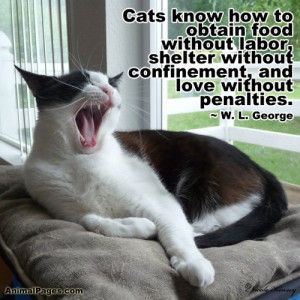 Shelter Animal Quotes