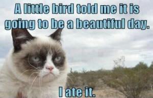 funny grumpy cats