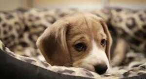 SAD-DOG-DIARY-facebook.jpg