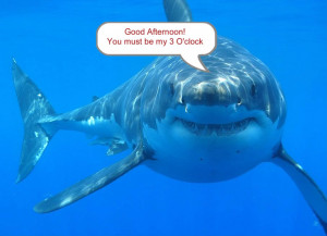 Funny Scuba Diving Quotes