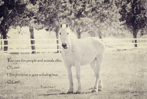 bible horse quotes